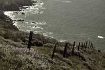 Point Reyes & The Headlands
